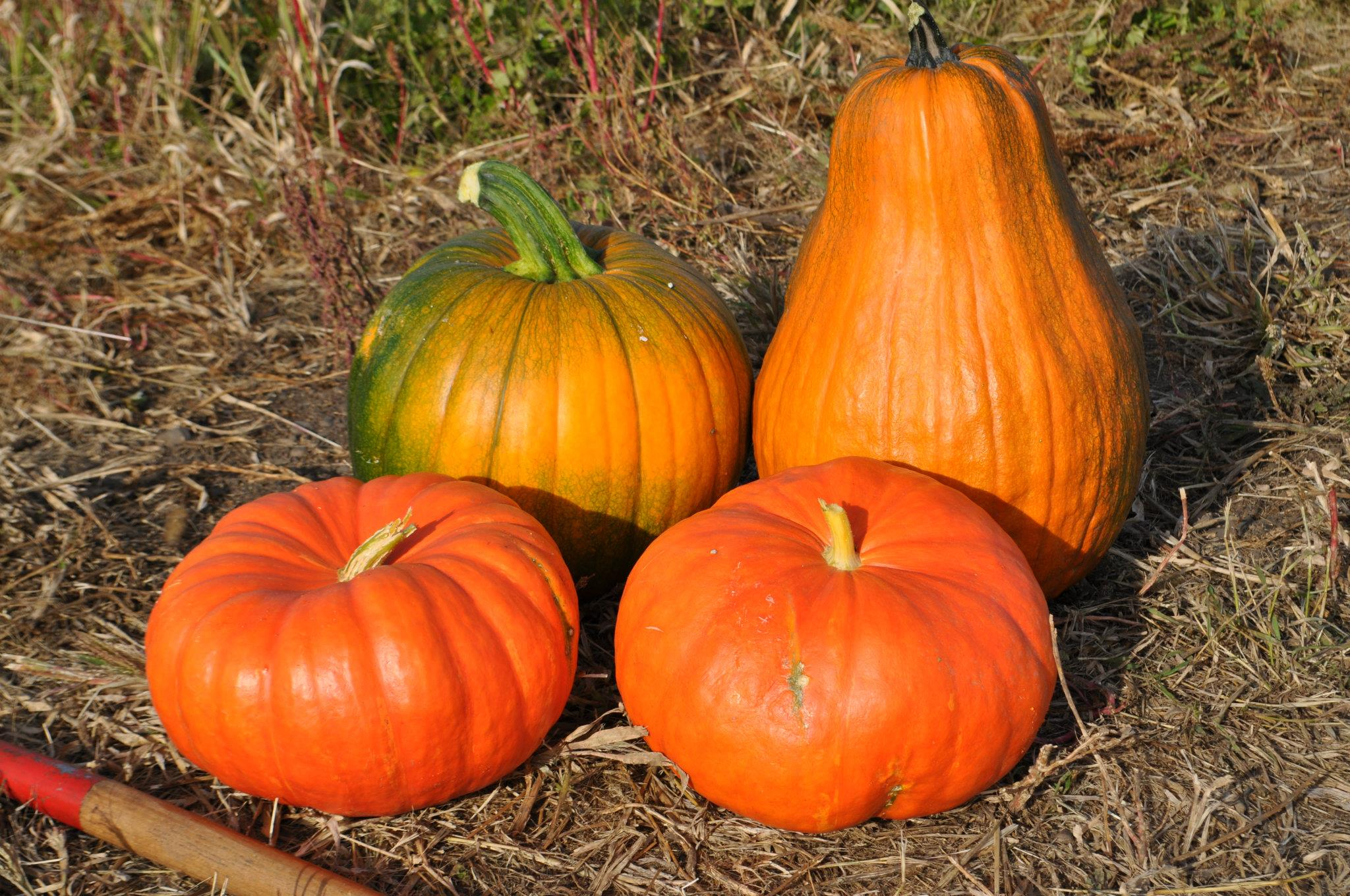 how to cook half a pumpkin