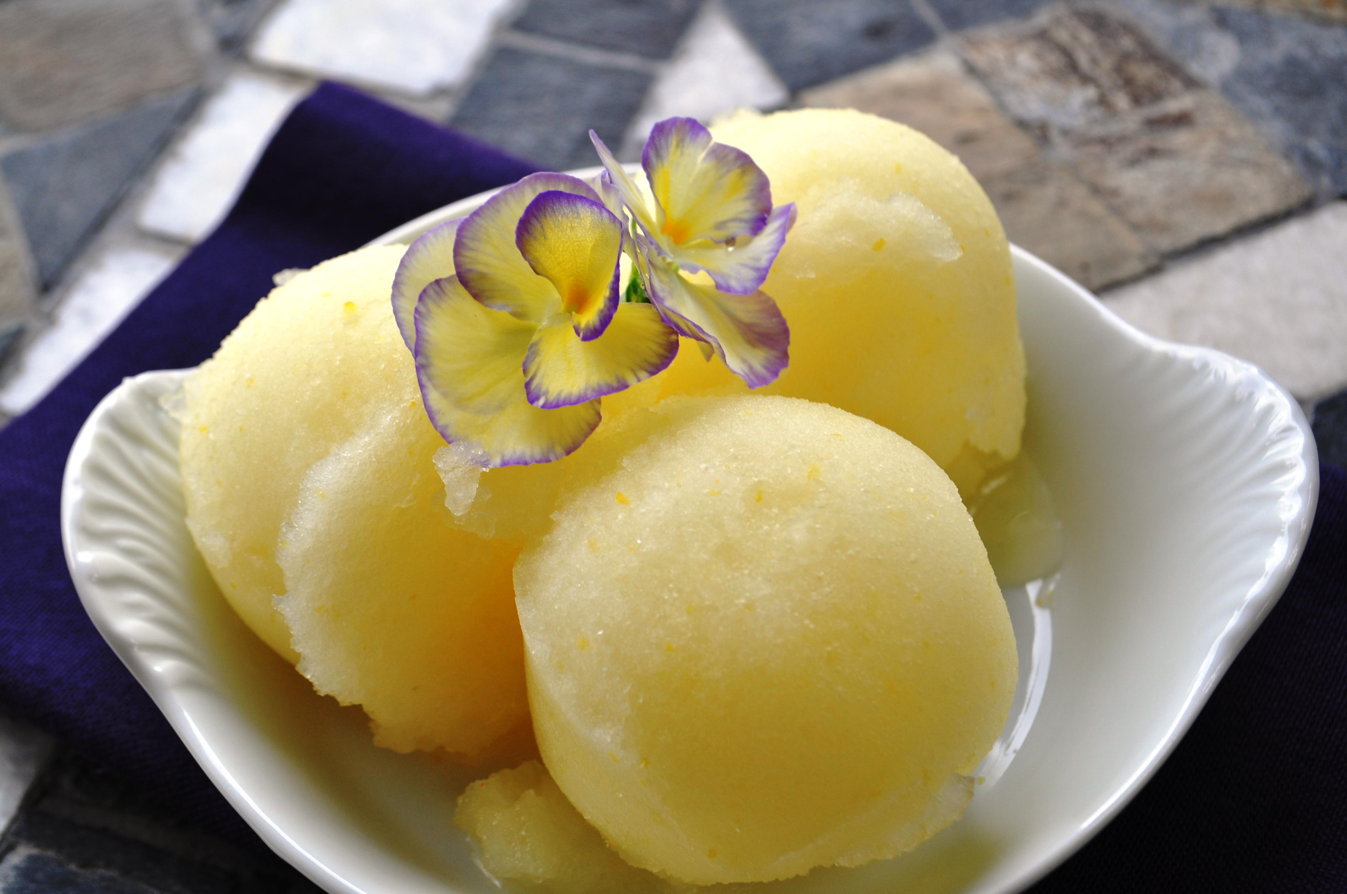 Camera Surgery & Lemon Sorbet | gluten free zen