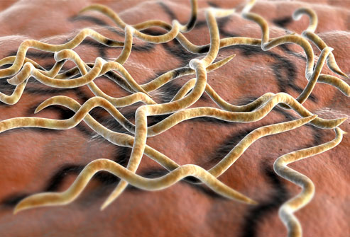 getty_rm_3D_illustration_of_lyme_disease_bacteria