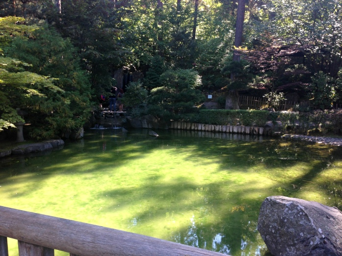 There's a huge Koi pond in the middle of the Japanese Gardens.
