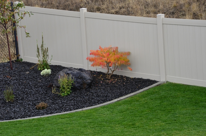 One of the bushes we planted a couple of months ago. Love the Fall colors!